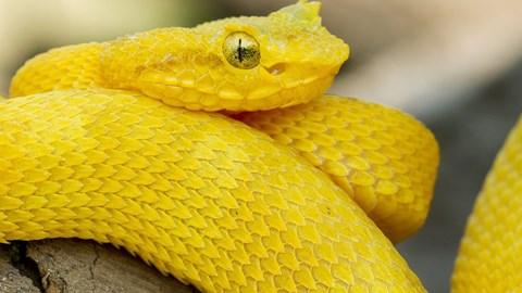 Trailer Vorsicht: Schlangen! Snakes - 3D