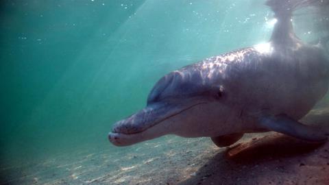 Trailer Samu und die Haie - Delphine in der Shark Bay