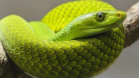 Trailer Vorsicht: Schlangen! Snakes